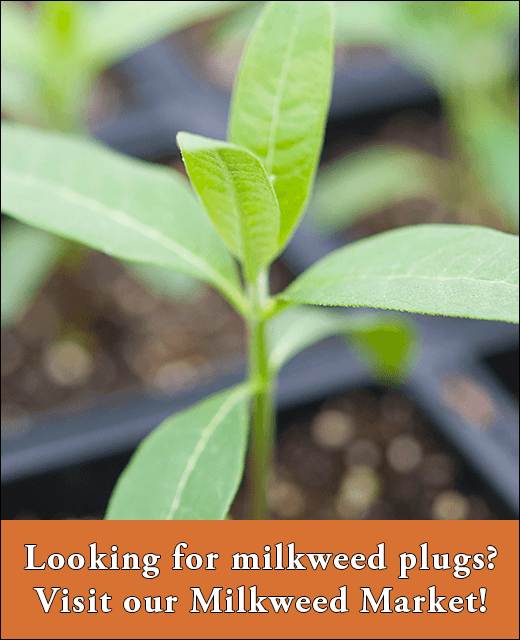 Looking for milkweed plugs? Visit our Milkweed Market